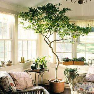 Cách trồng cây cảnh hợp phong thủy