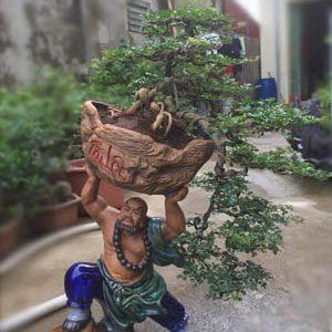 Cây Cần Thăng Bonsai - Võ Tăng dời non lấp bể