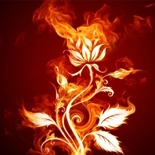 cây phong thủy mệnh hỏa