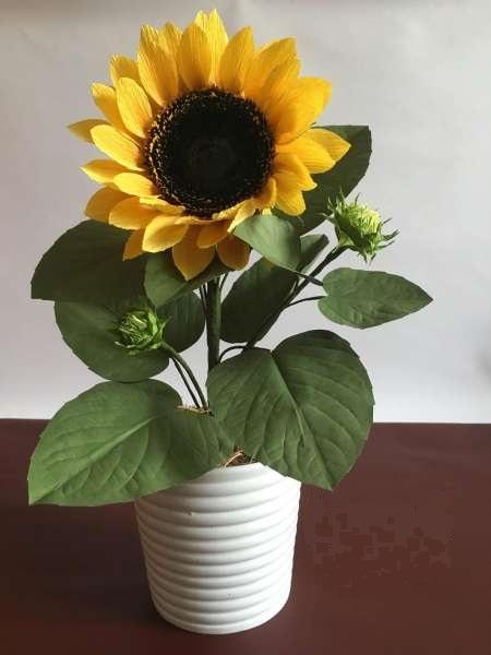 hoa hướng dương mini